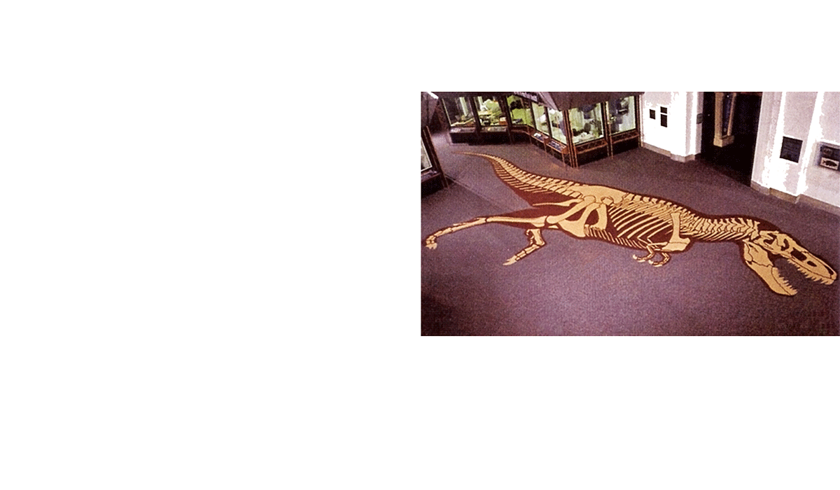 T-rex skeleton custom rug in museum